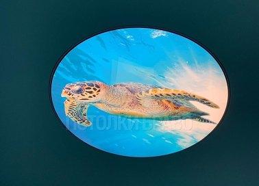 Матовый натяжной потолок с изображением черепахи НП-467 - фото 2