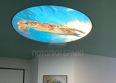 Матовый натяжной потолок с изображением черепахи НП-467