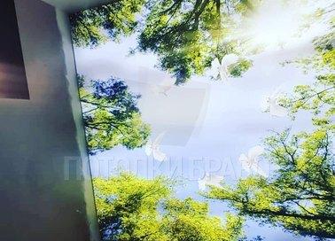 Лесной матовый натяжной потолок для коридора НП-505 - фото 2