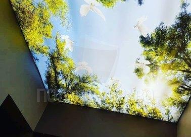 Лесной матовый натяжной потолок для коридора НП-505 - фото 3