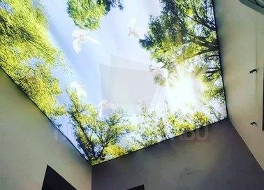 Лесной матовый натяжной потолок для коридора НП-505 - фото 4