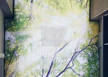 Матовый натяжной потолок с изображением леса НП-509 - фото 2