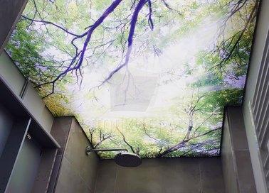 Матовый натяжной потолок с изображением леса НП-509