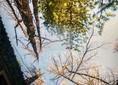 Матовый натяжной потолок с деревьями НП-510 - фото 2