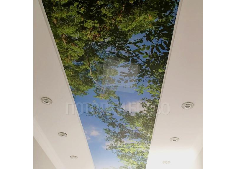 Матовый натяжной потолок с изображением листьев НП-511 - фото 2