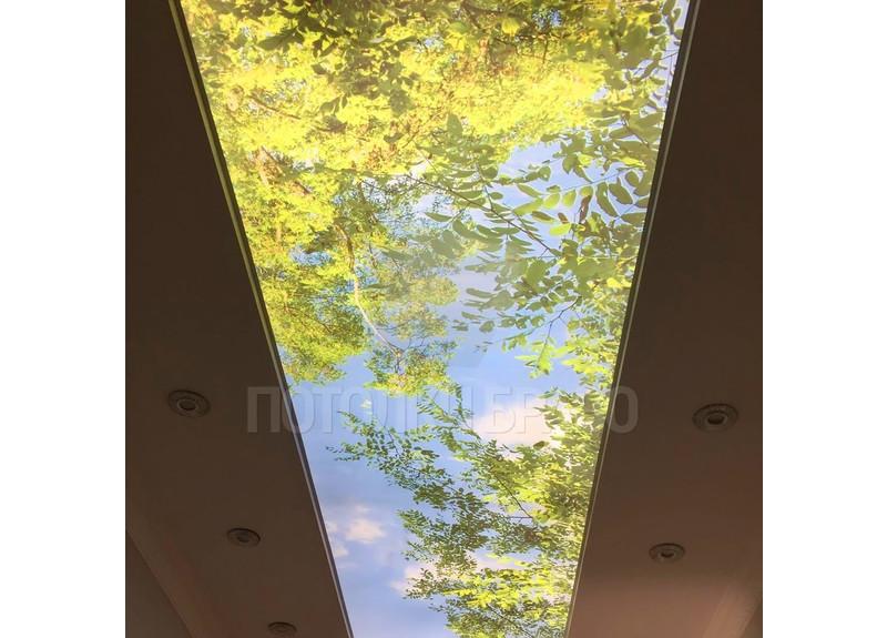 Матовый натяжной потолок с изображением листьев НП-511