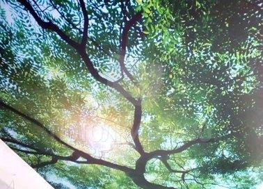 Матовый натяжной потолок с изображением дерева НП-512 - фото 2