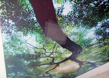 Матовый натяжной потолок с изображением дерева НП-512
