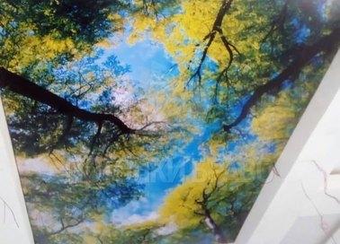 Двухуровневый матовый натяжной потолок с деревьями НП-513
