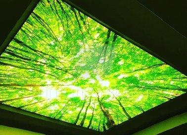 Зеленый матовый натяжной потолок с изображением НП-516