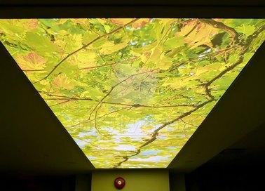 Матовый натяжной потолок с листьями для холла НП-517