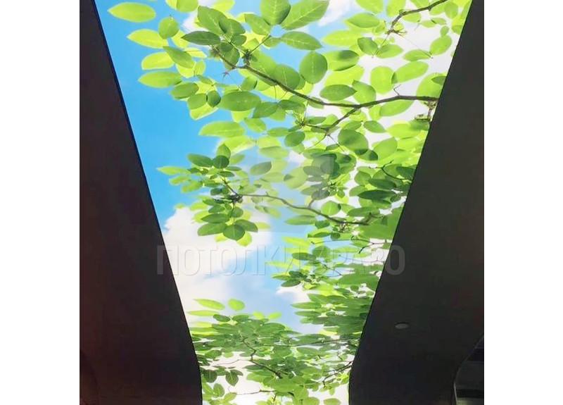 Матовый натяжной потолок с изображением листьев для холла НП-519