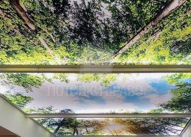 Матовый натяжной потолок с изображением леса НП-520