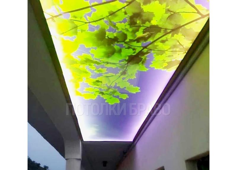 Матовый натяжной потолок с листьями и подсветкой НП-521
