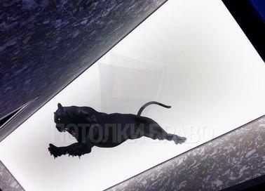 Матовый натяжной потолок с рисунком барса НП-647