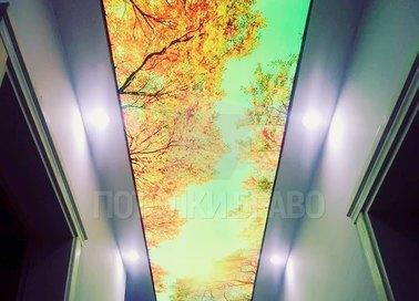 Матовый натяжной потолок в коридор с изображением клена НП-660 - фото 2