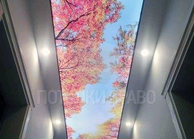 Матовый натяжной потолок в коридор с изображением клена НП-660