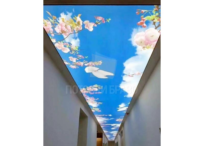 Матовый натяжной потолок с изображением цветущий вишни НП-665