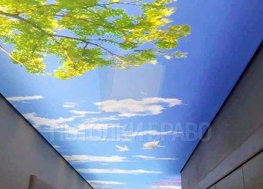 Матовый натяжной потолок с изображением дерева НП-672