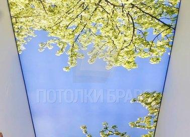 Матовый натяжной потолок с деревьями и небом НП-702