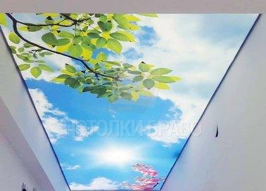 Матовый натяжной потолок с природой для коридора НП-1079