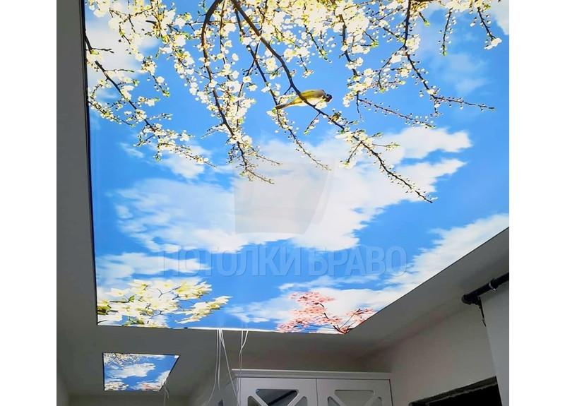 Матовый натяжной потолок с изображением для коридора НП-1080