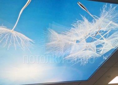 Натяжной потолок с изображением для общественного помещения НП-1082 - фото 2