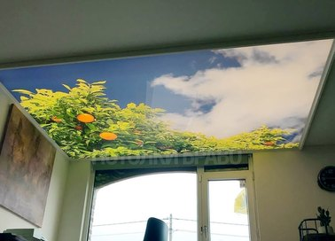 Матовый натяжной потолок с рисунком природы НП-1103