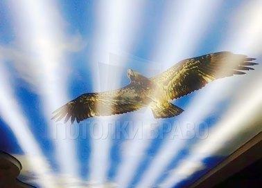Небесный матовый натяжной потолок с рисунком орла НП-1167