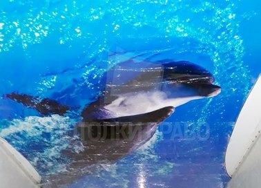 Сатиновый с дельфином натяжной потолок НП-1319