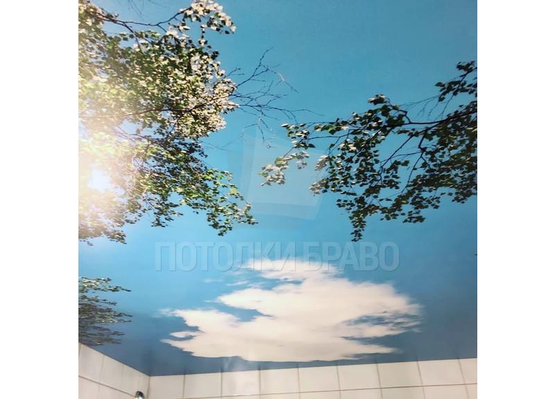 Матовый натяжной потолок с небом и деревьями НП-1404