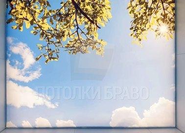 Матовый натяжной потолок с небесным видом НП-1419