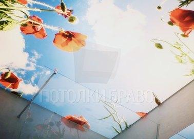 Матовый натяжной потолок с рисунком неба и маков НП-1465