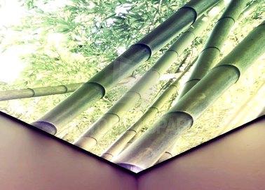 Матовый натяжной потолок с изображением бамбука НП-1735