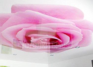 Глянцевый натяжной потолок с изображением розы НП-1773