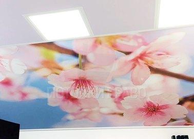 Матовый натяжной потолок с вставкой изображения цветов НП-1774