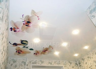 Глянцевый натяжной потолок с орхидеями НП-1776