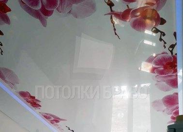 Матовый натяжной потолок с орхидеями по периметру НП-1787