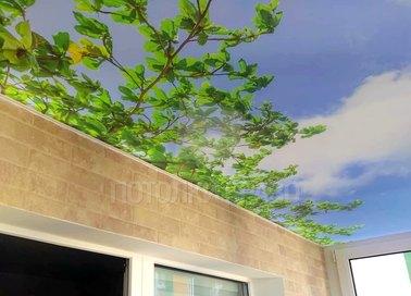 Матовый натяжной потолок с природой для балконаНП-124 - фото 3